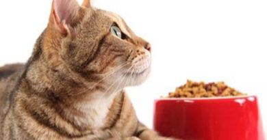tipos de pienso para gatos