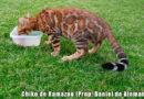 pienso de gatos esterilizados para el bengalí